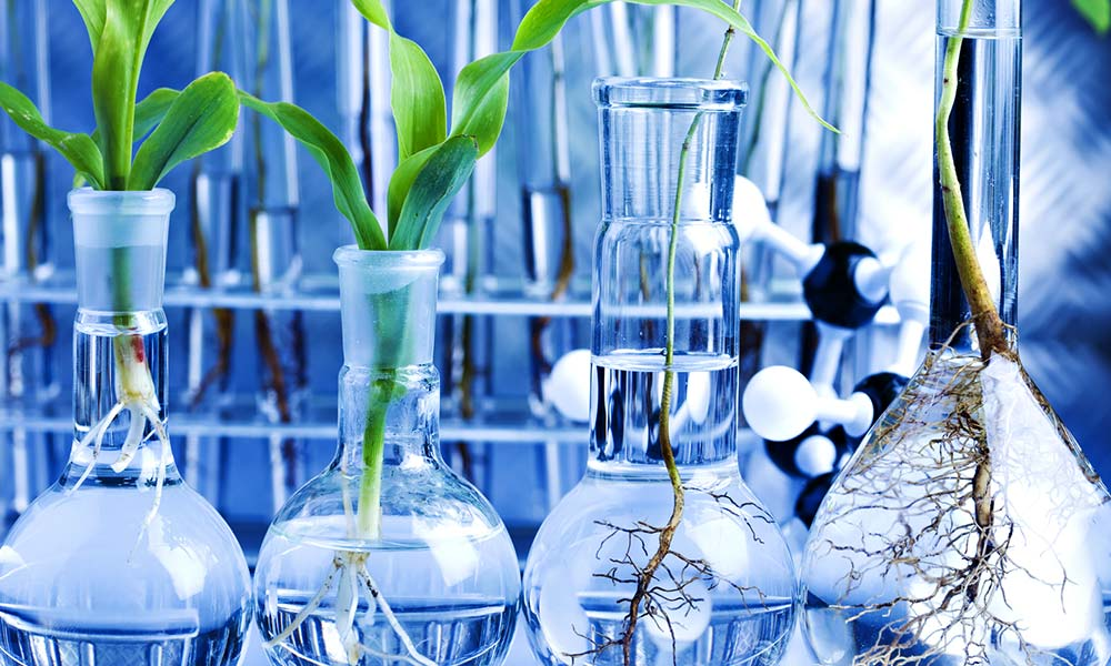 National conference on Agriculture and Biotechnology-309385351