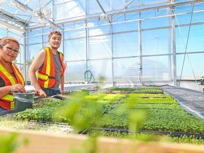Kỹ thuật Làm vườn – Phong cảnh – Nhà kính, Những Chương Trình Học Được Khuyến Khích tại Canada!